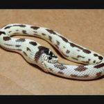 某Python实现的尾部递归