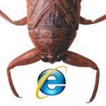 9个最常见IE的Bug及其fix